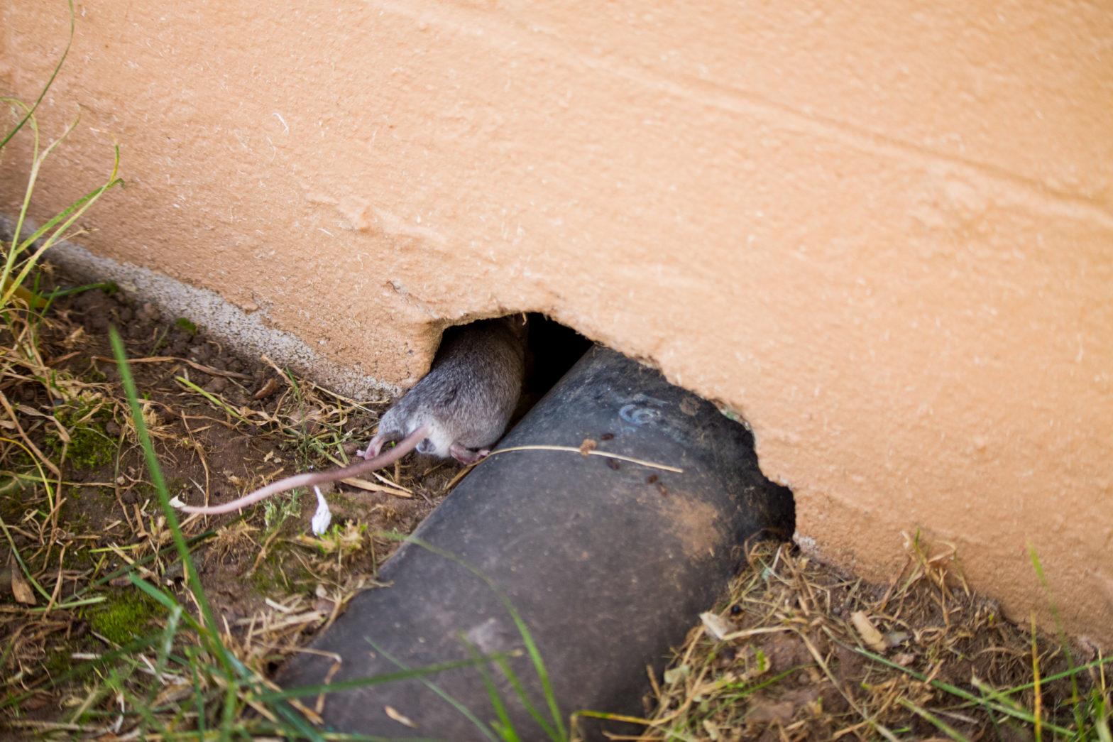 Vermatech Pest Control