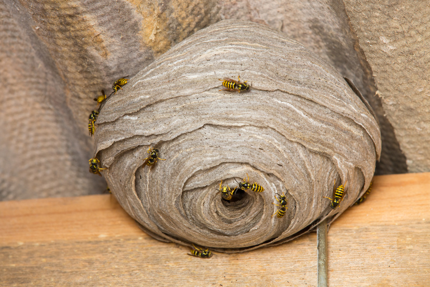 Wasp nest Reading